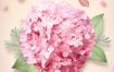 11款夏季鲜花植物蝴蝶郁金香玫瑰菊花茶花海报PSD设计素材